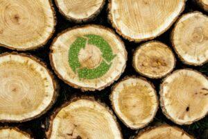 Read more about the article Il Legno, materiale nobile e rinnovabile